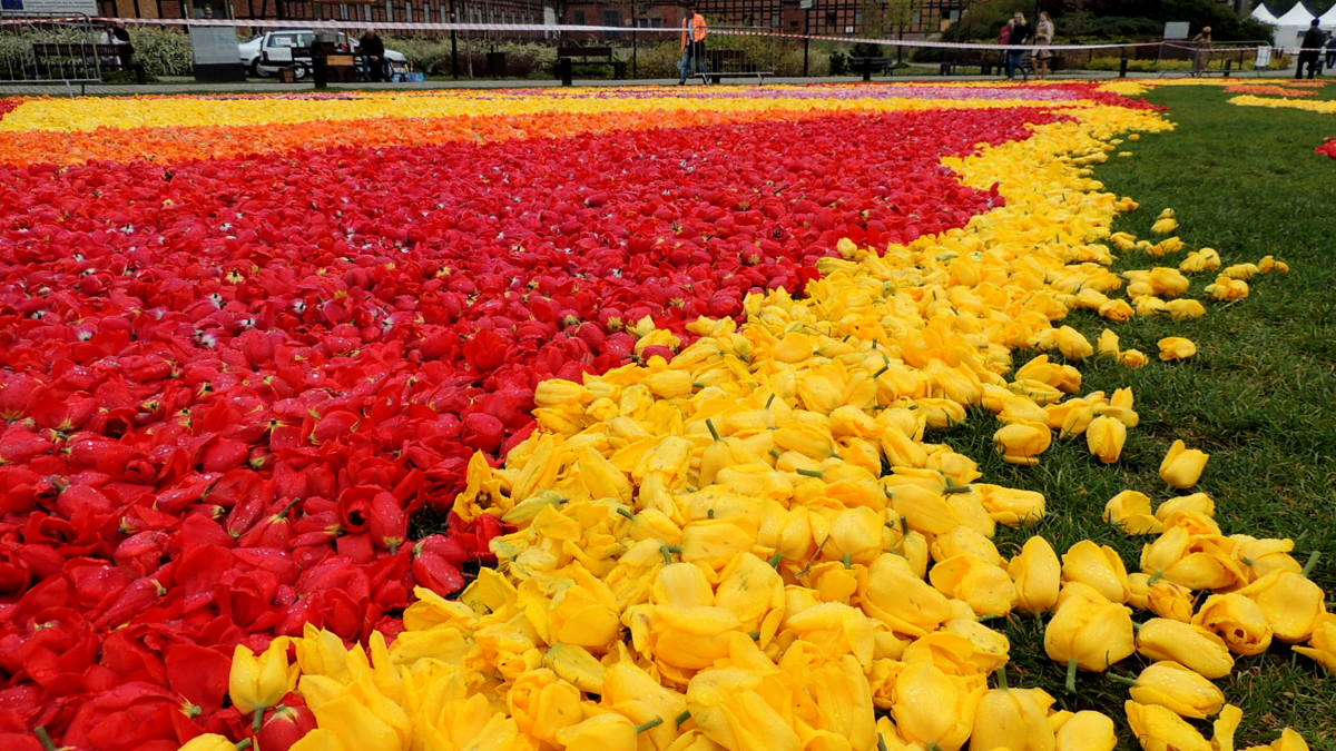 Rok Wisły Dywan Kwiatowy Na Wyspie Młyńskiej Polskie