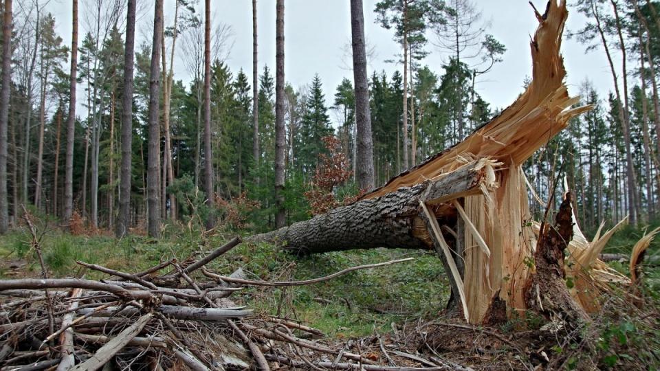 Drzewo przygniotła pilarza. Mężczyzna nie żyje